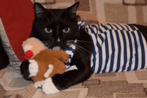 Олесин котик - Адольф