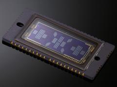 Датчик автофокусировки как в EOS-1D X