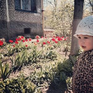 Тюльпаны растут во всех дворах! 10 апреля 2014